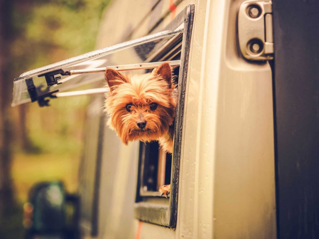 best rv pet cameras with temperature